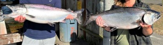 fish rouge.jpg